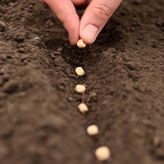 seed-1.jpg